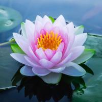 Lotus System